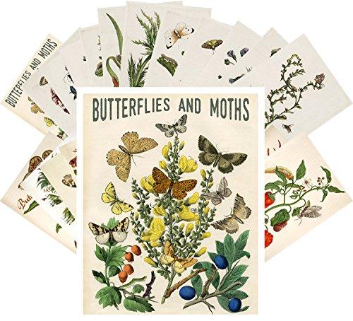 (Postcard Set 24 cards Butterfly and Moths Vintage Book Illustration)