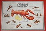 48 Lobster - How to Eat in 8 easy steps - Placemats 48 Sheets Paper Disposable