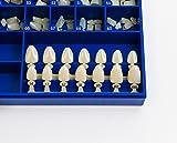 Polycarbonate Temporary Dental Crowns Kit 180 pcs