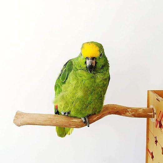 voloki Marco de pie, Percha para pájaros Jaula de pájaros de ...