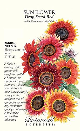 Drop Dead Red Sunflower Seeds - 4 (Botanical Interests Sunflower)