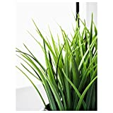 IKEA Artificial Potted Plant, Wheat Grass, 7.75