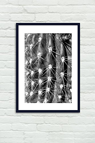 Black and White Cactus Art Print, Cactus Thorns Spikes Photo, Fine Art Macro Photography Print, Modern Wall Art Decor, Abstract Art Picture
