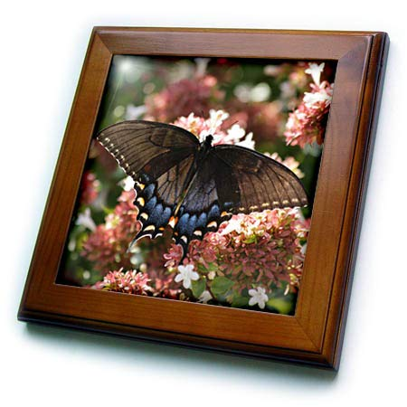 (3dRose Stamp City - Insects - Photograph of a Female Tiger Swallowtail on an abelia Bush. - 8x8 Framed Tile (ft_306494_1))