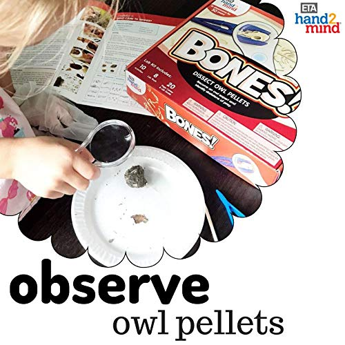 Animal Science Kit For Kids, Educational Toy (Age 8+) 10 STEM Experiments & Activities on Animal Biology, Dissect Owl Pellets & Study Bones, Gift for Girls & Boys, Children & Teens, STEM Authenticated by hand2mind (Image #3)