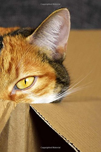 Download Cat In A Box Notebook: 150 lined pages, softcover, 6 x 9 PDF