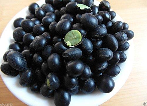soybean-seeds-korean-black-edible-soybean-organic-non-gmo-100-untreated-seed