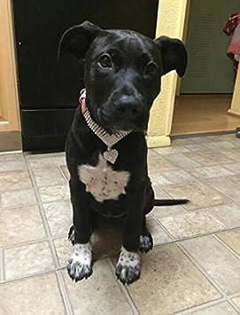 EXPAWLORER Rhinestone Dog Collar Pet Puppy Cat Crystal Collars Girl Jeweled Necklace