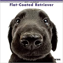 Gpc Calendar 2019 JAPAN IMPORT : THE DOG calendar flat coated Retriever 2019