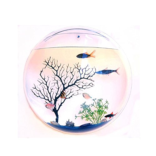 FILY Wall Mounted Acrylic Fish Bowl Fish tank Aquarium Fish Bubble Wall-mounted hydroponic pot Home Decoration Pot by FILY