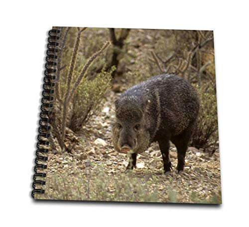 Danita Delimont–Wildlife–アリゾナ、Javelina野生生物、arizona-sonora砂漠–us03kwi0021–キムリ・ウィット–Drawing Book 4 x 4` db_88009_3