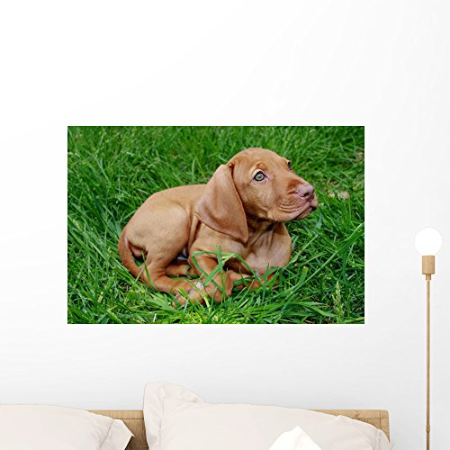 Hungarian Vizsla Puppy Sits by Wallmonkeys Peel and Stick Graphic (24 in W x 16 in H) WM76222