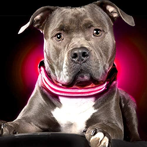 Shine Dogs Ultimate LED Collar