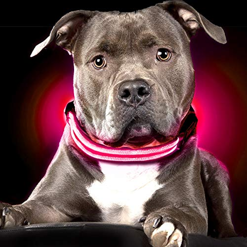 Shine for Dogs Ultimate LED Dog Collar - USB Rechargeable, Cable Included, 5 Awesome Colors. Ultra Bright, Durable, Made to Last. Make Your Dog More Visible at Night (Medium, Pink)