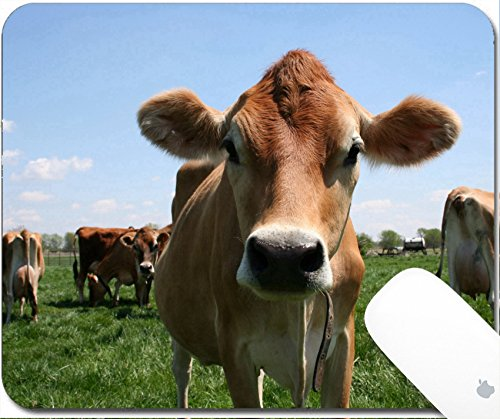 Luxlady Gaming Mousepad 9.25in X 7.25in IMAGE: 449914 A beautiful female Jersey cow in pasture