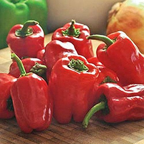 CAJUN BELLE - Bell Pepper _ Beautiful RED BELL PEPPER!!!!!!!(25 - Seeds)