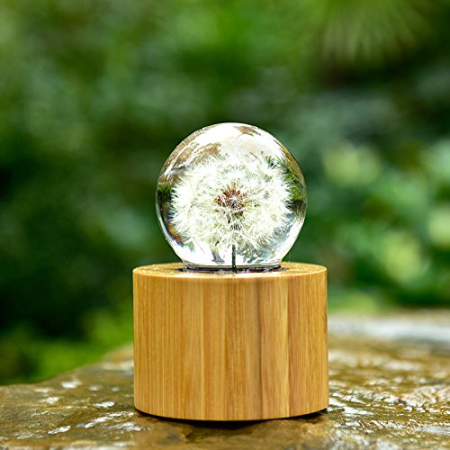 Mylifestyle Musical Box Real Specimens Dandelion Ball with Wood Base Music Box Gift for Christmas/Birthday/Valentine's Day,(Melody Happy Birthday to You) by Mylifestyle (Image #5)