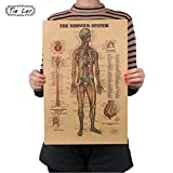 CASA SHOP Adesivo De Parede Vintage Style Retro Paper Poster Giftsthe Muscles Of The Body Structure