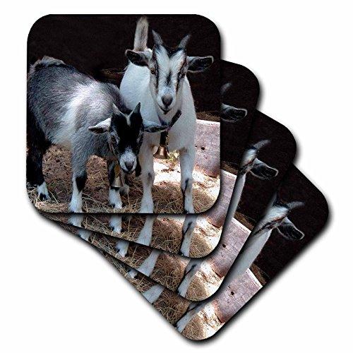3d Rose 3dRose LLC Pygmy Goat Coaster, Soft, Set of 4