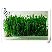 100 seeds/pack Organic wheat grass seed germination rate of 99 % of families balcony planting seasons