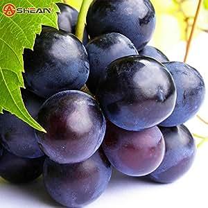 100semillas/Unidades Sweet aluminio) avanzado de semillas de uva frutas semillas naturales crecimiento deliciosa de uva jardinería plantas de frutas