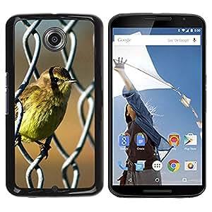 Caucho caso de Shell duro de la cubierta de accesorios de protección BY RAYDREAMMM - Motorola NEXUS 6 / X / Moto X Pro - Bird Cute Spring Baby Nature Sunshine