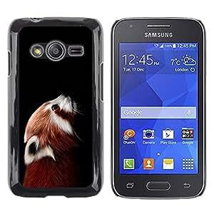 Paccase / Dura PC Caso Funda Carcasa de Protección para - Little Red Panda Bear Cute Face Portrait Animal - Samsung Galaxy Ace 4 G313 SM-G313F