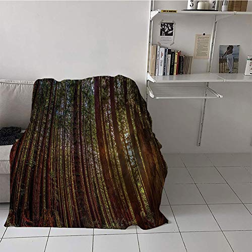 Khaki home Children's Blanket Print Microfiber All Season Blanket (50 by 70 Inch,Forest,Redwood Forest in California USA Nature Outdoors Landscape Woods Park,Redwood Green Yellow