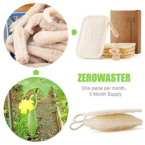 Natural Sponges for Dishes, Loofah Dish Sponges Eco-Friendly - Biodegradable Washing Up Vegetable Sponges - No Odor Scrubber for Dishes (5 Pack)