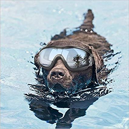 Dog Sunglasses Windproof Goggles Pet Eye Wear Medium Large Dog Swimming Glasses