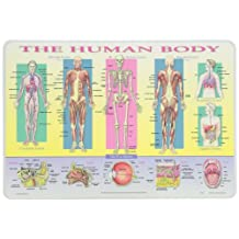 PAINLESS LEARNING PLACEMATS-Human Body-Placemat