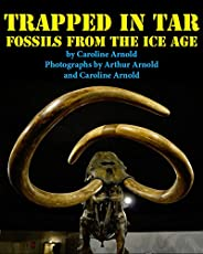 Trapped in Tar: Fossils from the Ice Age
