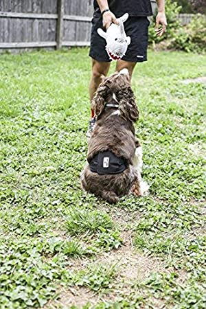 Dog Marking Male Dog Wraps Pet Parents Premium Washable Dog Belly Bands 3pack of Male Dog Diapers