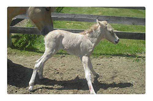 Tree26 Indoor Floor Rug/Mat (23.6 x 15.7 Inch) - Filly Horse Newborn Equine Foal Stallion Animal