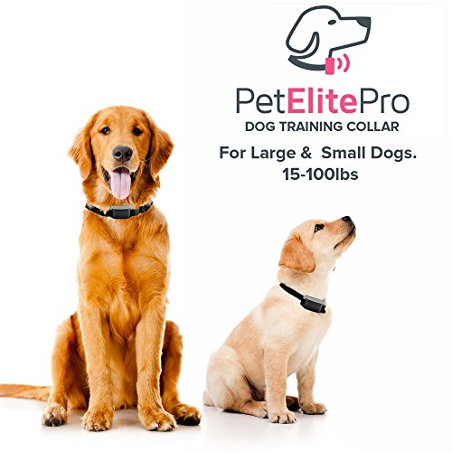 Best Bark Collar For Large Dogs Reviews