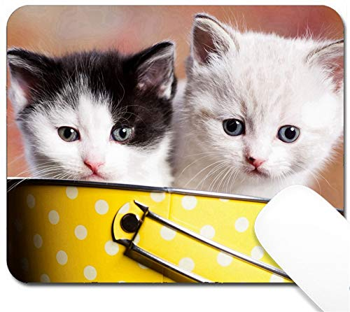 (MSD Mouse Pad with Design - Non-Slip Gaming Mouse Pad - Portrait of a Young Small Persian Kitty Image 10257825 Customized Tablemats Stain Resis)