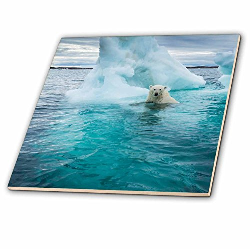 3dRose Danita Delimont - Bears - Canada, Repulse Bay, Polar Bear swimming by iceberg on Hudson Bay - 6 Inch Glass Tile - Hudson Bay Glasses