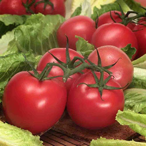 Creole Tomato Seeds (125 Seeds) Non-GMO