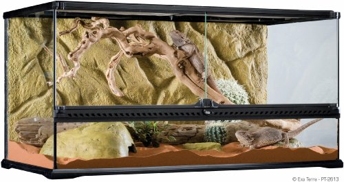 (Exo Terra Glass Terrarium, 36 by 18 by 18-Inch)