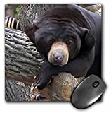 3dRose LLC 8 x 8 x 0.25 Inches Mouse Pad, Oh Man, What A Day, Black Bear (mp_11586_1)