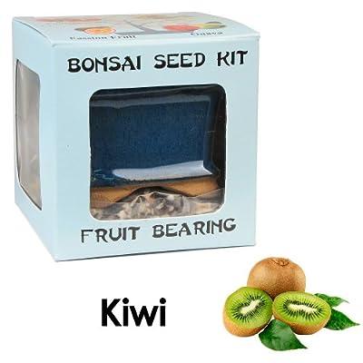 Eve's Kiwi Bonsai Seed Kit, Fruit-Bearing, Complete Kit to Grow Kiwi Bonsai from Seed