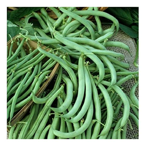 (David's Garden Seeds Bean Bush Tendergreen SV8I71 (Green) 100 Non-GMO, Heirloom Seeds)