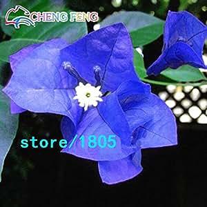 La mezcla 50pcs color Semillas Bougainvillea spectabilis Willd Semillas hermosas flores de plantas de Bonsai para jardín