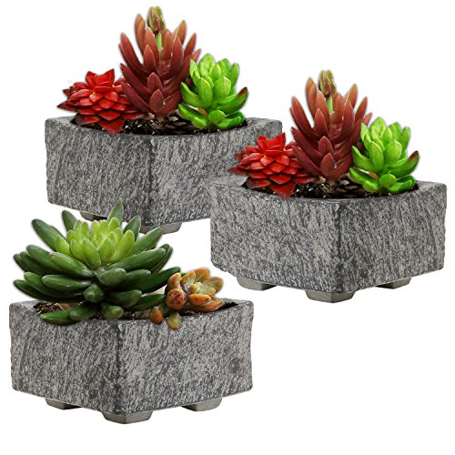 Decorative Cement Succulent Planter Containers