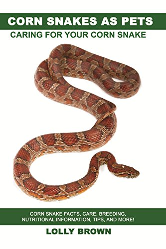 Corn snakes as pets corn snake facts care breeding nutritional corn snakes as pets corn snake facts care breeding nutritional information fandeluxe Image collections