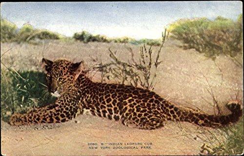 Indian Leopard Cub, New York Zoological Park Other Animals NY Original Vintage Postcard