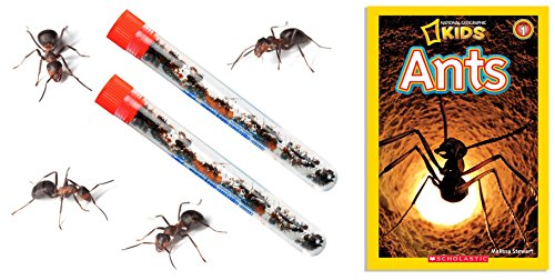 Nature Gift Store 2 Tubes Live Ant Farm Ants Plus Ant Book -Bundle