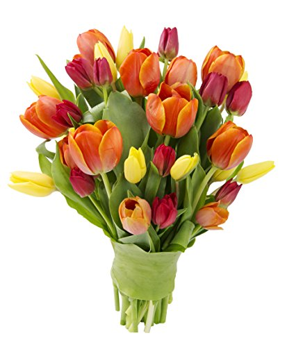 ck Of Fresh Tulips, Red, Range and Yellow, 30 Count (Tulip Combo)