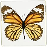 "Monarch Butterfly Paperweight(3x3x1"")"
