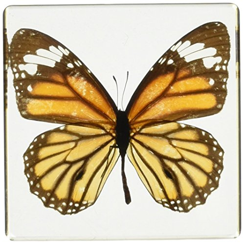 Monarch Butterfly Paperweight